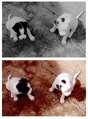 Trocando uma ideia! (Banessa :)) Tags: dog baby cão july stuart cachorro quintal filhote idéia trocandoidéia
