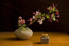 Luck Blossoming (Laurie York) Tags: stilllife dice flower spring blossoms explore luck crabapple crabappleblossoms marionmiller laurieyork nikond300 miniaturevasebymarionmiller