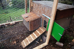 nestbox and ramp front