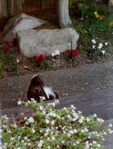 skunkapril2009