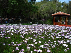 Vn hoa DALAT VIETNAM (tanhaovn) Tags: travel flower wonderful vietnam dalat beutiful landsape