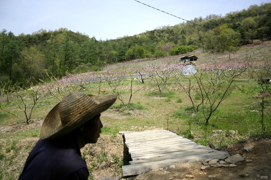 Orchard(1)