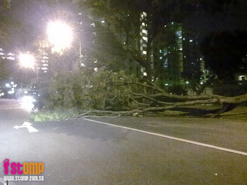 Storm winds whip S'pore: Just look at the damage caused