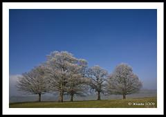 Icy Trees (JKmedia) Tags: park blue trees winter sky tree nature field landscape countryside day nt wideangle explore icy nationaltrust polariser dyrham canoneos40d 15challengeswinner fabcap jkmedia vosplusbellesphotos