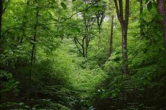 green_hillside