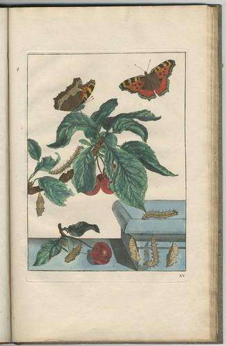 Naauwkeurige waarneemingen, 1740 c