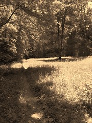 Picture & a Song (Magellan67) Tags: sepia meadows trails mtb pisgahnationalforest northmillsriver pictureandasong