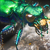 ~ Ewww.....  (cool) ~ (ViaMoi) Tags: macro bug insect aperture shiny metallic critter iso gree viamoi