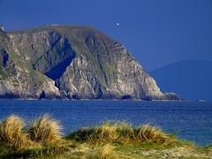 Gannet above the cliffs (Oceanraider........ On & Off for summer :)) Tags: blue ireland sea island mayo gannet eveninglight keel sebird menawn minnauncliffs minawn achillocean
