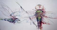 foreverago dragonflies - stupid big (Jennifer Kraska) Tags: watercolor dragonflies dragonfly jennifer kraska stupidbig jenniferkraska