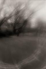 Tree flare (Otto K.) Tags: atlanta abstract tree film nature blackwhite d76 plastic flare canoneos3 ottok fomafomapan lensbabycomposer