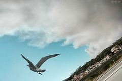 Escape (Ben Heine) Tags: light sun bird clouds freedom soleil fly high wings poem earth pigeon dove atmosphere ciel libert harmony future terre rays tomorrow oiseau climate colombe ailes hauteur voler environement petersquinn arodynamique benheine hubertlebizay hubzay