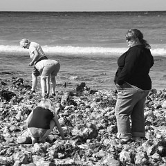 in the rock pools (Nick J Stone) Tags: west norfolk east crabs anglia limpets winkles overdressed runton westrunton nickstone