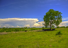 cowstrees (davedehetre) Tags: blue sky storm tree field grass clouds rural landscape spring day cattle cows cloudy farm kansas thunderstorm idyllic kansasthunderstorms