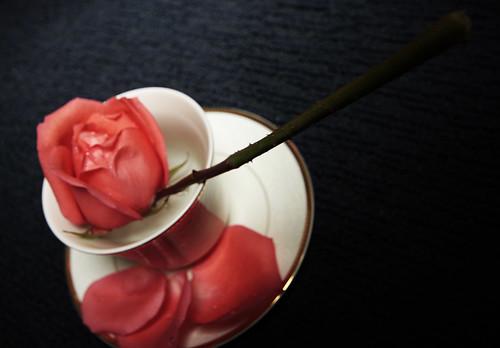 Roses 19