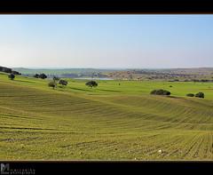 Alentejo IX (Marco_Coelho) Tags: portugal gua paisagem campo alentejo rvores mombeja ilustrarportugal srieouro