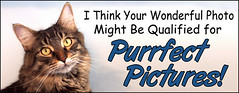 Purrfect Pictures Invite 200903v1 jpg (by Bakko Brats)