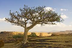 The view from Debre Damo (giuseppedr) Tags: africa ethiopia amba naturesfinest mywinners abigfave aplusphoto treesubject overtheexcellence theperfectphotographer natureselegantshots vanagram thebestofmimamorsgroups debredamomonastry