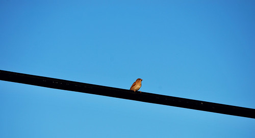 On a wire....