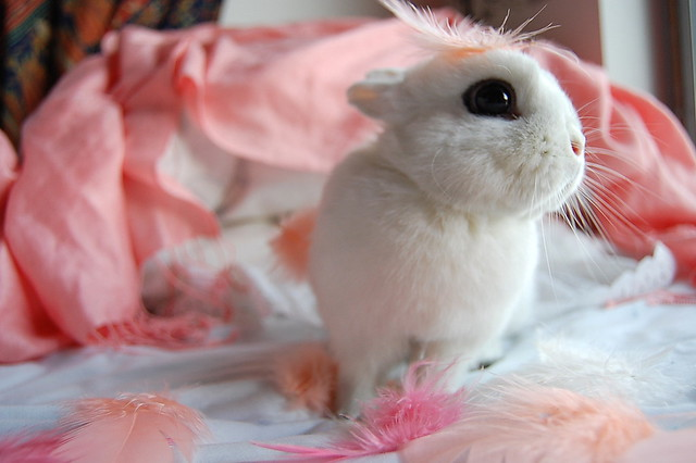 bunny with the feathers