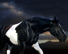 Planet hopping... (theartofthehorse) Tags: horses horse beautiful beauty animal dramatic breed drama cavallo chevaux maddiedeephotographer