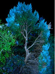 Old blue friend-haiku (spysgrandson) Tags: tree colorful nightshot flash wichitafalls shrub sonycybershot flashphoto anawesomeshot onlythebestare spysgrandson