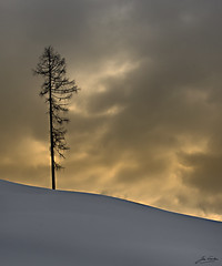lonely tree (Jan Linskens) Tags: sky snow tree landscape austria oostenrijk landschap hinterglemm superaplus aplusphoto platinumheartaward flickrestrellas janlinskens vanagram fotoclubvenray flickraward