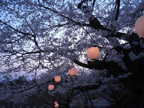 09-04-05【桜】@若草山-04