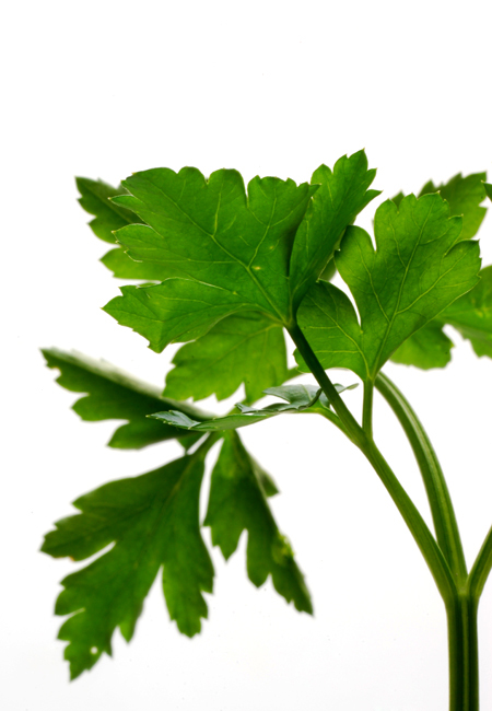 parsley© by Haalo