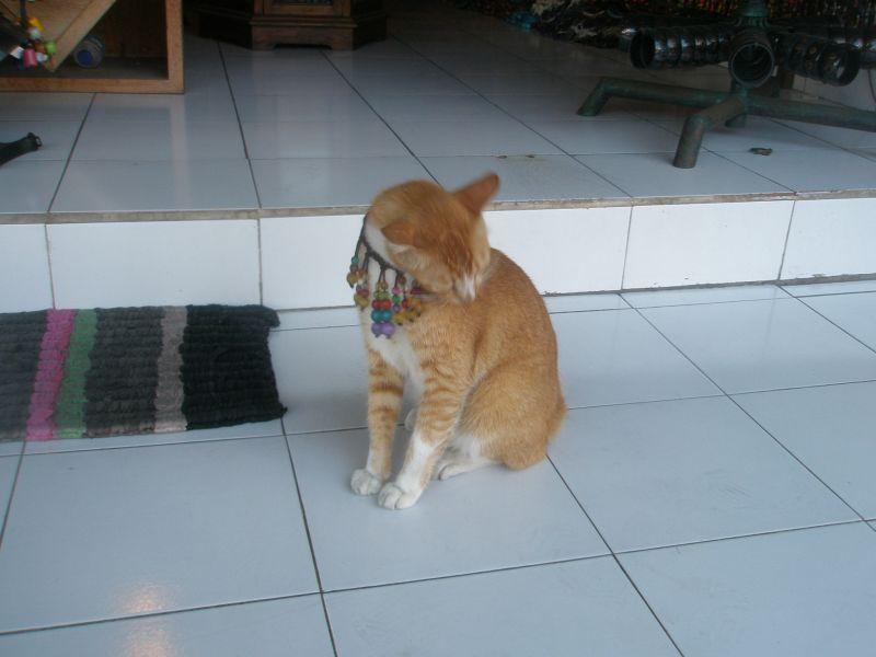 cat bling