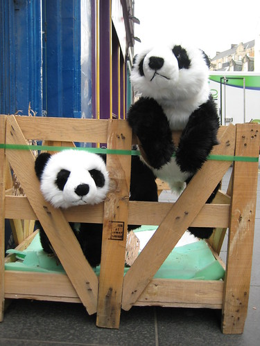 New Pandas Arriving!