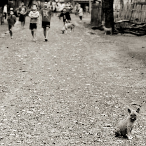A dog - Laos par Eric Lafforgue