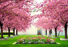 Temple Grounds (Von Taylor) Tags: flowers trees utah nikon tulips saltlakecity tulip mormontemple saltlaketemple d300 naturesfinest blueribbonwinner abigfave anawesomeshot colorphotoaward flickrdiamond goldstaraward simplythebest~flowers