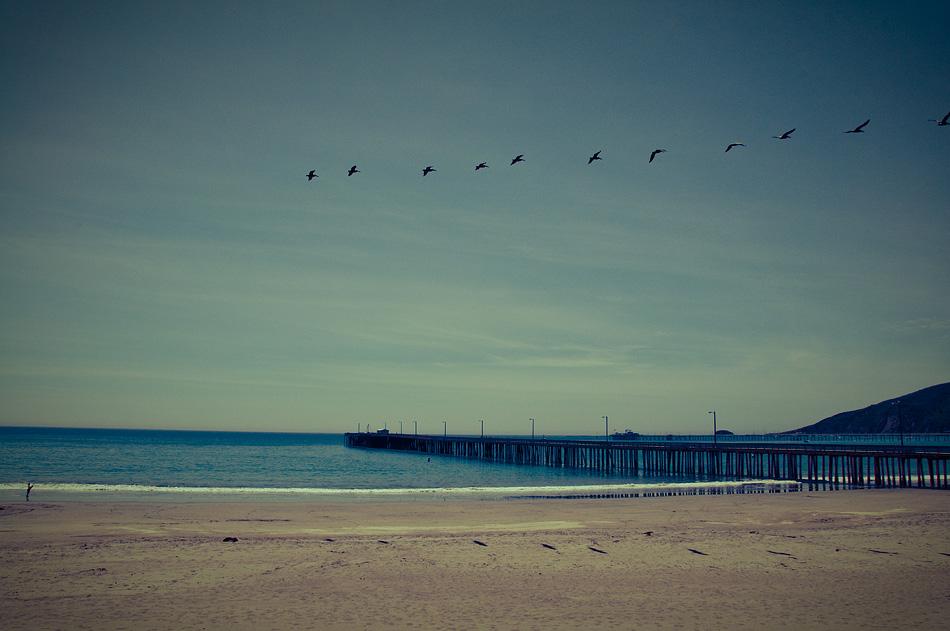 Birds, all in a Row
