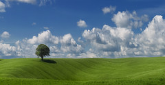 Green Miles - View 2 (wentloog) Tags: uk sky panorama cloud tree field wales canon landscape eos interestingness gallery britain farm pano cymru cardiff explore caerdydd 5d agriculture hdr wfc 24105 ptgui canoneos5d ef24105f4l wentloog pantools welshflickrcymru stevegarrington