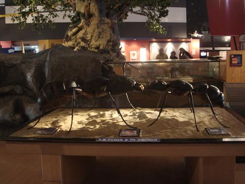 Exhibición de hormigas en Espacio Ciencia