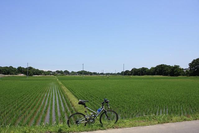 川島町下大屋敷付近