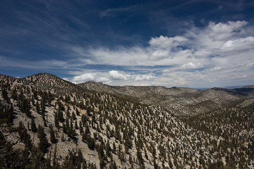 The White Mountains, California