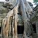 Cambodia-2555