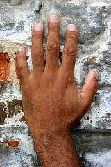Daniel #6 Hand (just.Luc) Tags: hairy man male wall hand main bricks fingers uomo mano mur hombre homme muur briques doigts behaard vingers bakstenen