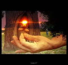 the light (Eddi van W.) Tags: light sun tree texture love creativity energy handmade digitalart gimp creativecommons meditation deepness kreativität spiritualität eddi07 graphicmaster