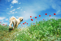 romantic dog (.:: Maya ::.) Tags: green eye nature river landscape spring maya bulgaria valley  trakia     striama  mayaeyecom mayakarkalicheva  wwwmayaeyecom