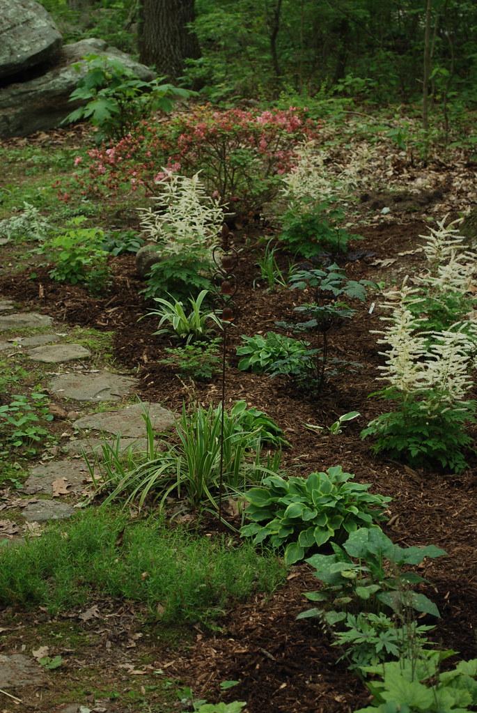 Shade Garden - South Side