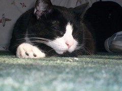 Sleeping angel (OCD is the life 4 me) Tags: sleeping pet black cute angel cat jasper fuzzy kitty buddy cuddly pal bestfriend sunbathing catsdothedarnedestthings