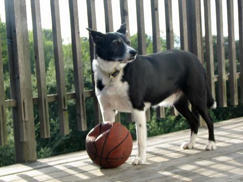 Jake & Ball