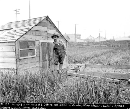 East end of Antonio Ditore's hothouse, 1817 21st Avenue South, showing the high water mark after a flood in May, 1923. Courtesy of Seattle Municipal Archives.