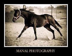 The World's Best Photos of bahrain and horses - Flickr Hive Mind