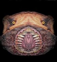 My lovely pet...on Friday the 13th (Sigurd66) Tags: pet monster mouth fear creepy horror terror boca miedo mascota fridaythe13th monstruo colmillos mandibulas viernes13