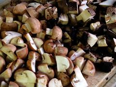 Champignon og portobello