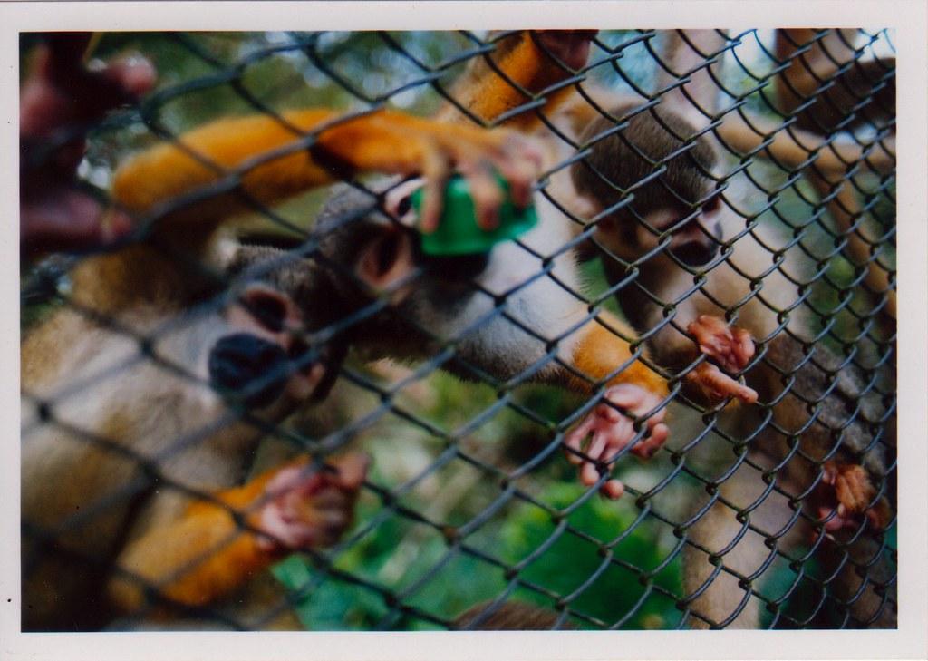 monkeybebidas